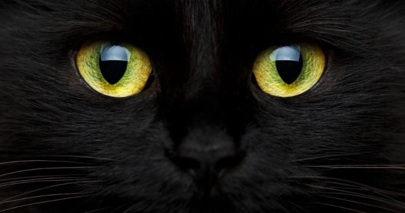 Lewisburg Tn Halloween 2020 Keep Pets Safe this Halloween   Companion Animal Hospital of