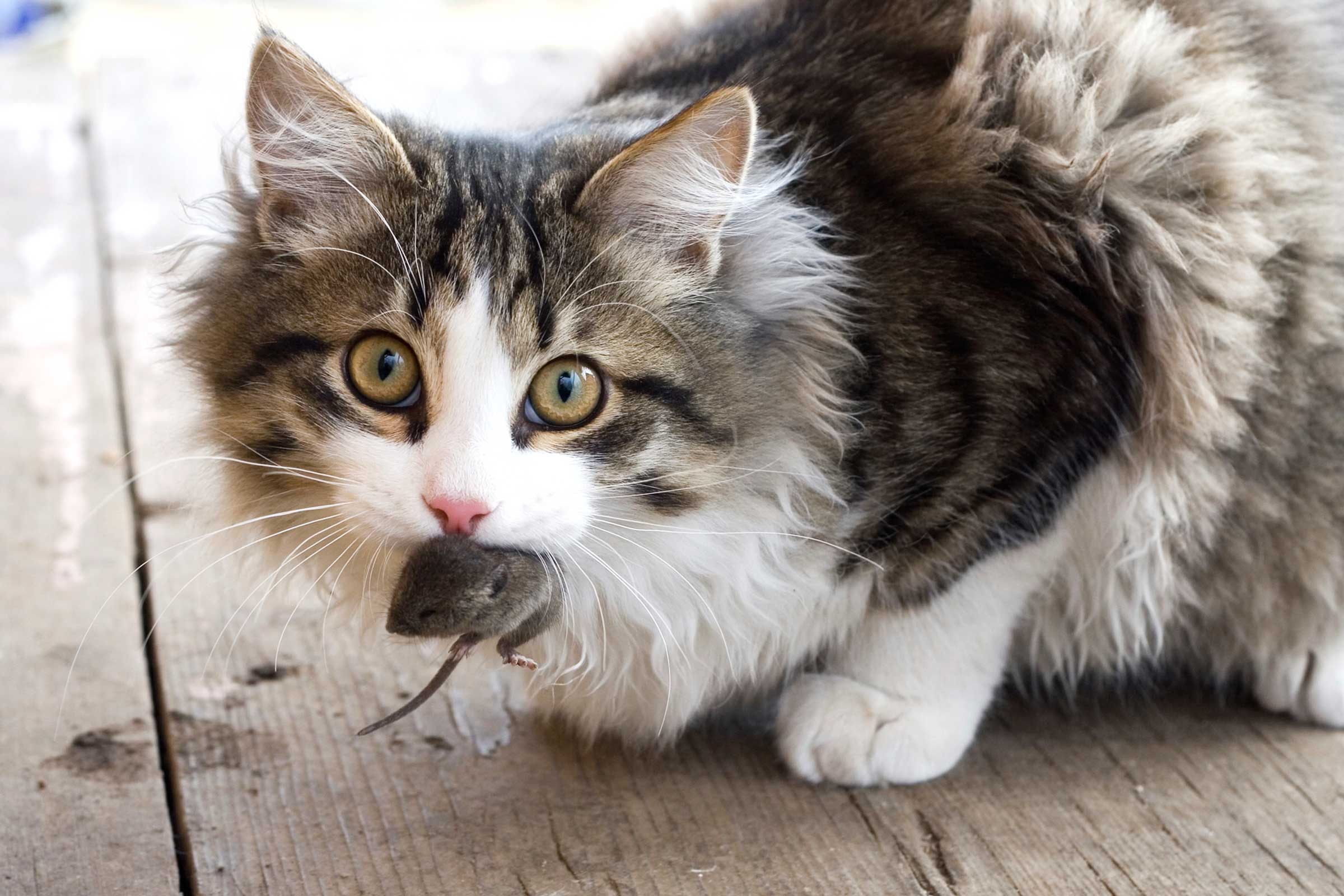 Is Your Cat Acting Strange? Here are 13 Reasons Why.