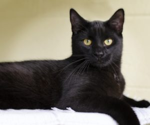 Busting Myths About Black Cats