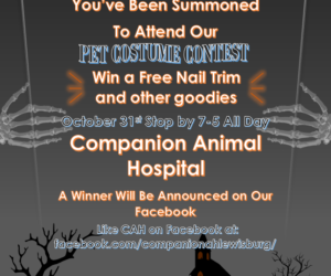 Please join us on October 31st for a Halloween Pet Costume Contest!