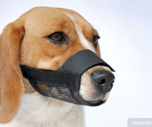 Muzzles Can Be A Helpful Tool