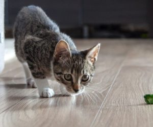 10 Cat Exercises Your Pet Will Enjoy