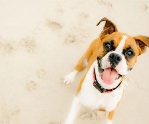 Can Dogs Wear Sunscreen?