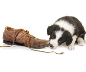 New Puppy Training Tips: Caring for a Teething Puppy