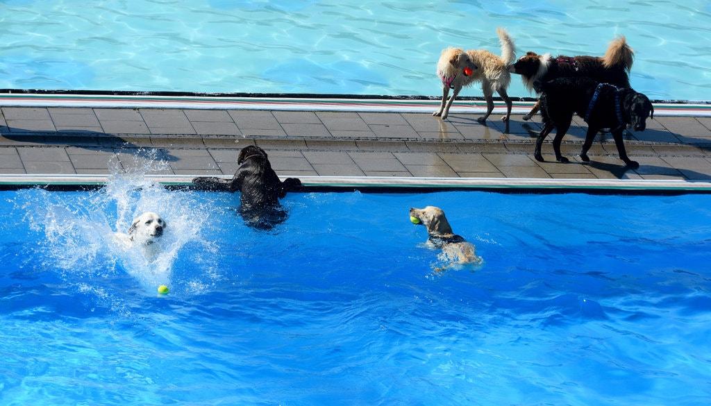 Does Your Dog Need Swim Lessons?