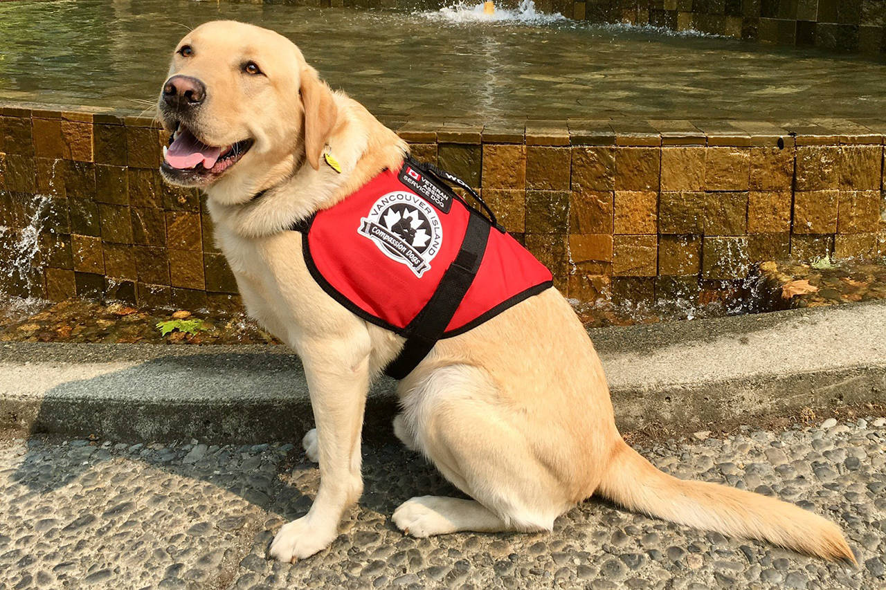 10 Very Good Service Dogs Who Saved Their Owners' Lives