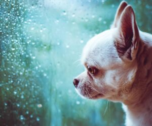 Does Weather Affect the Mood of Your Pet? Keep Them From Getting the Rainy Day Blues.