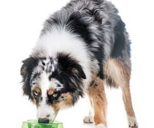 Is your dog overprotective of their food and toys?