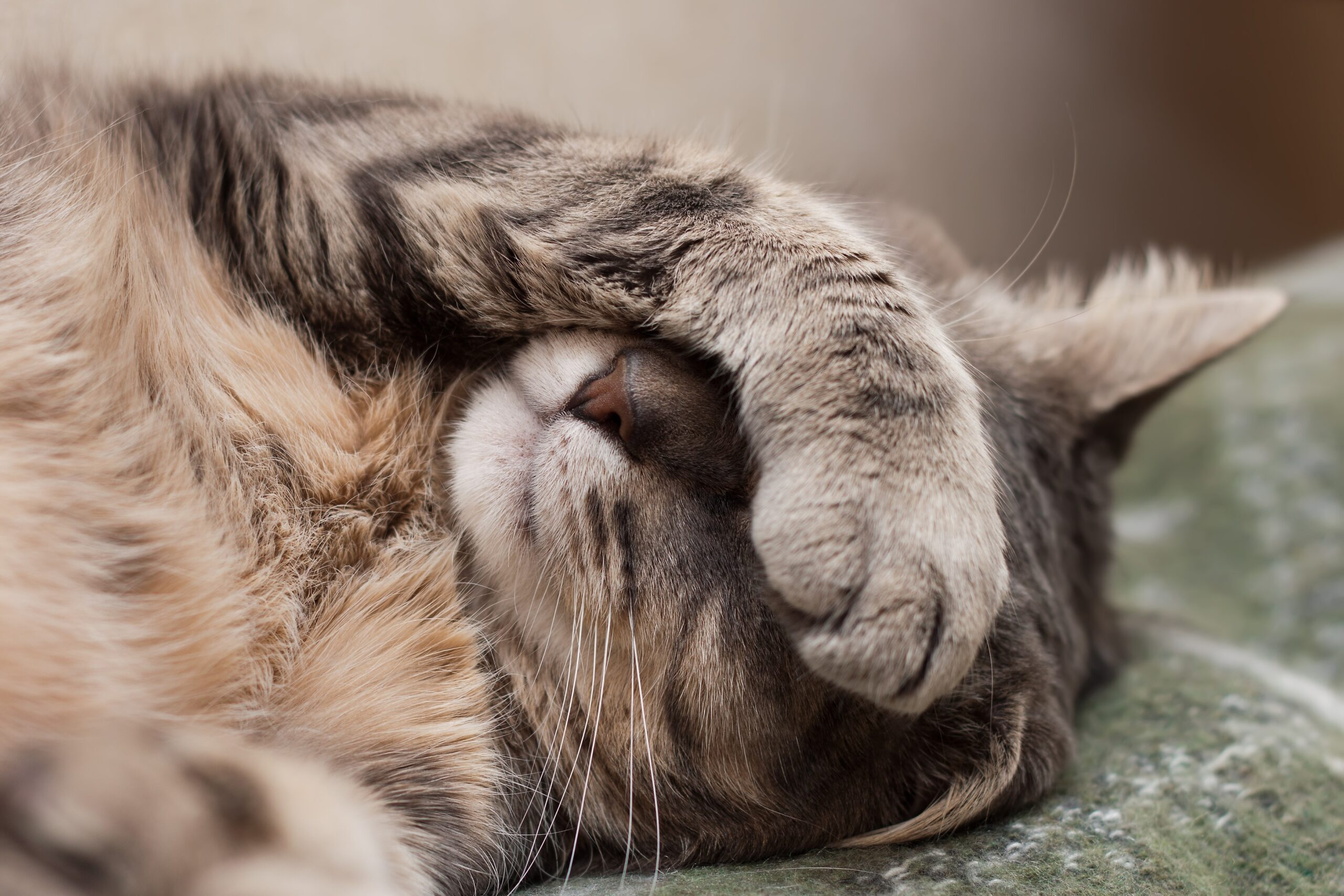 Urinary Blockages In Cats, A REAL EMERGENCY